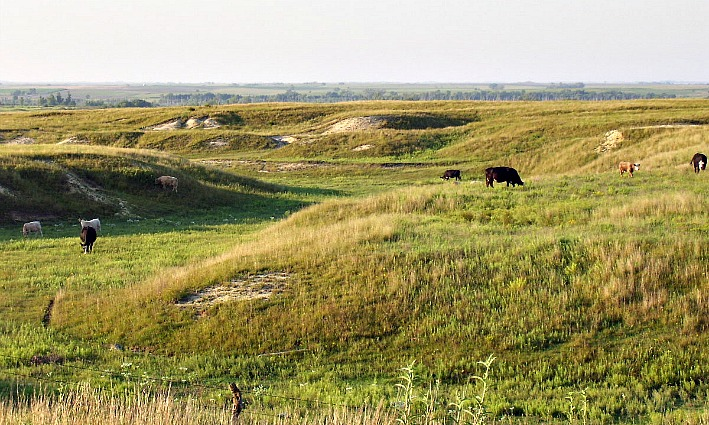 Prairie near Webster Lake