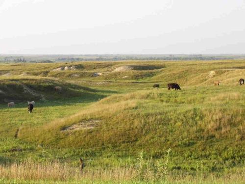 Webster Prairie